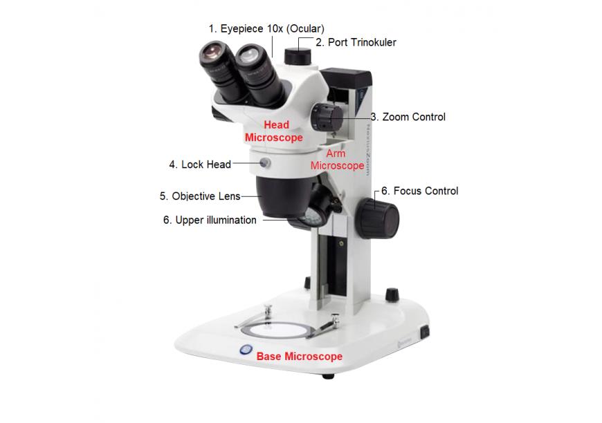 Bagian-bagian mikroskop stereo